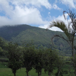Organic Coffee in Costa Rica: A Battle of David vs. Goliath?