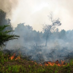 Indonesia's Forest Fires: Is Ag To Blame?