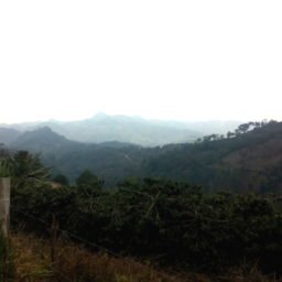 Dispatches from the Field: Honduras